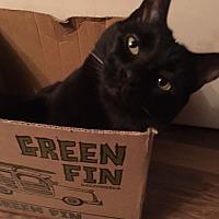 Adopt A Pet :: Joey - Herndon, VA