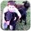 Photo 2 - Retriever (Unknown Type)/Golden Retriever Mix Dog for adoption in Cincinnati, Ohio - Ben