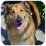 Photo 1 - Collie Mix Dog for adoption in Spring Valley, California - Holly