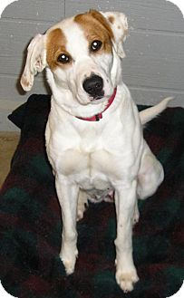 Hound (Unknown Type) Mix Dog for adoption in Glenwood, Minnesota - Winnie