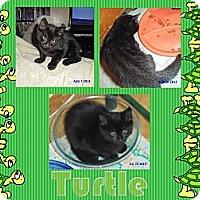 Adopt A Pet :: Turtle - Washington, DC