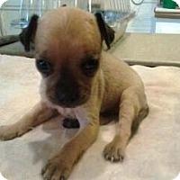 Adopt A Pet :: Gina - Chandler, AZ