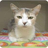 Adopt A Pet :: Checkers - Mesa, AZ