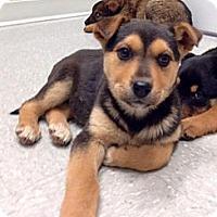 Adopt A Pet :: Bernadette - Saskatoon, SK