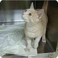 Adopt A Pet :: Milo - Bartlett, TN