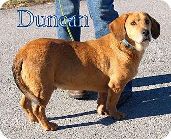 Basset Hound Mix Dog for adoption in Lewisburg, West Virginia - Duncan
