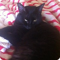 Adopt A Pet :: Baloo * courtesy post - Hurst, TX