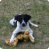 Adopt A Pet :: Wall-E - Homewood, AL