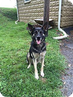 German Shepherd Dog Mix Dog for adoption in Greeneville, Tennessee - Viktor