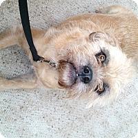 Adopt A Pet :: Walter - House Springs, MO