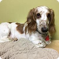 Adopt A Pet :: Benson - Decatur, GA