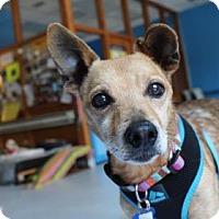 Adopt A Pet :: Neptune - San Francisco, CA