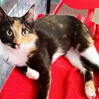 Adopt A Pet :: Nashua - Sarasota, FL