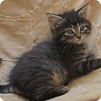 Adopt A Pet :: Keneth Michael - Crossville, TN