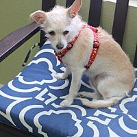Adopt A Pet :: Sugar - Norwalk, CT