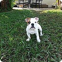 Adopt A Pet :: Stewie - Fort Lauderdale, FL