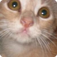 Adopt A Pet :: Mango - Dallas, TX