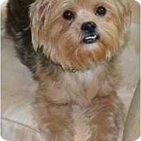 Adopt A Pet :: Stewie - Greensboro, NC
