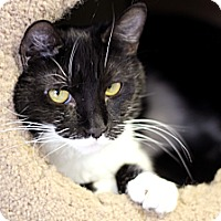 Adopt A Pet :: Tomania - Chicago, IL