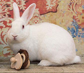 Florida White Mix for adoption in San Diego, California - Dillon