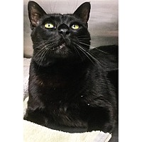 Adopt A Pet :: Baxter - Webster, MA