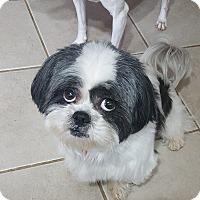 Adopt A Pet :: Truman - Troy, MI
