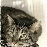 Adopt A Pet :: Jupiter - Pueblo West, CO