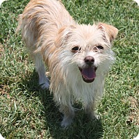 Adopt A Pet :: Bunny - Henderson, NV