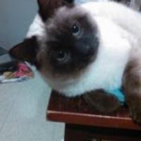 Adopt A Pet :: Marlin - East Norriton, PA