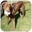 Photo 2 - Labrador Retriever/Shepherd (Unknown Type) Mix Dog for adoption in Berkeley, California - Hero
