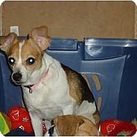 Adopt A Pet :: Bonnie - Toronto/Etobicoke/GTA, ON