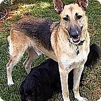 Adopt A Pet :: **MAX**Video** - Pasadena, CA