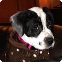 Adopt A Pet :: Elsa - Marlton, NJ
