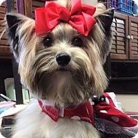 Adopt A Pet :: Karma - stella, NC