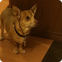 Adopt A Pet :: Emme-ADOPTED!! - Lynnwood, WA