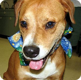Hound (Unknown Type) Mix Dog for adoption in Melrose, Florida - Buster