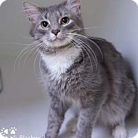 Adopt A Pet :: Blackwell - Merrifield, VA