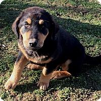 Adopt A Pet :: Bronx - Rancho Cucamonga, CA