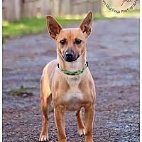 Adopt A Pet :: Honey - Seattle c/o Kingston 98346/ Washington State, WA