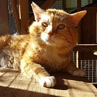 Adopt A Pet :: Theodore - Capshaw, AL