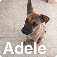 Adopt A Pet :: ADELE-6MONTH SHEPHERD MIX - Mesa, AZ