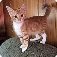 Adopt A Pet :: Mango - Chattanooga, TN