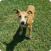 Adopt A Pet :: Dale - Moberly, MO