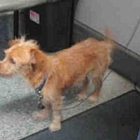 Adopt A Pet :: Enzo - Santa Barbara, CA