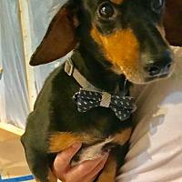 Adopt A Pet :: Bruno - Pearland, TX