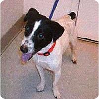 Adopt A Pet :: Pharoah - Oklahoma City, OK