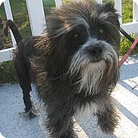 Adopt A Pet :: Misty - Jacksonville, FL
