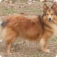 Adopt A Pet :: Renny - Charlottesville, VA
