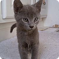 Adopt A Pet :: Princess - Morgan Hill, CA