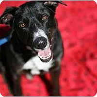 Adopt A Pet :: Cooper! - Los Angeles, CA